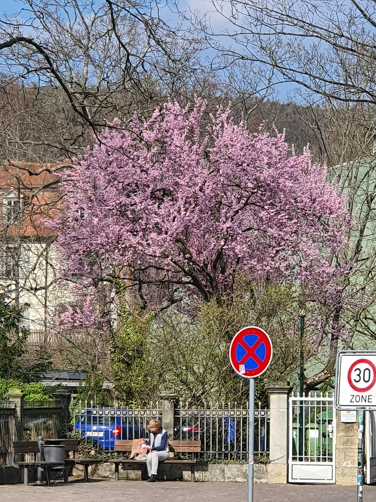 Botanischer Garten der Stadt Jena im Frühling