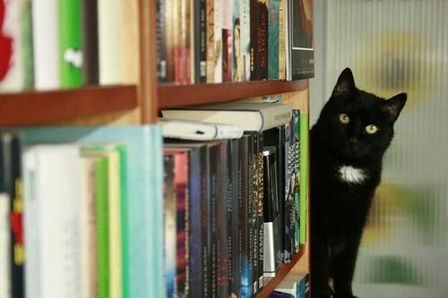Beispiel für die richtige Beschriftung eines Bildes unter einer CC-Lizenz: bibliothekarin, Sossi loves books, Flickr.com, unter CC-BY 2.0 Generic